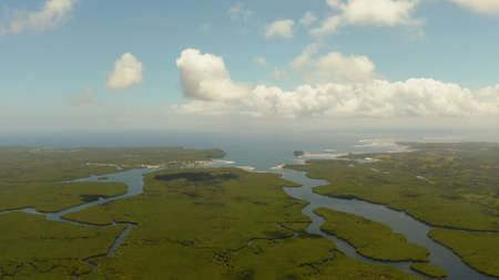 Mangrove rainforest with green trees in the sea water, aerial view. Tropical landscape with mangrove grove.