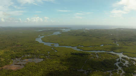 Aerial panoramic mangrove forest view in Siargao island,Philippines. Mangrove landscape