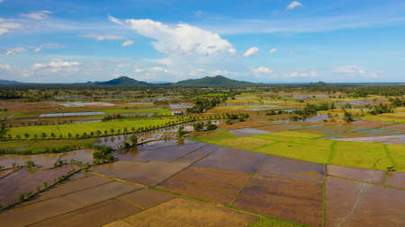 Landscape on Leyte Island, Philippines. Rice fields, top view. Agriculture in a tropical climate. Tropical landscape with fertile soil. Agriculture concept.