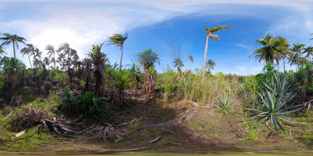Tropical vegetation and palm trees. 360 VR. Forest and tropical vegetation.