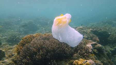 The sea and the coral reef is polluted with plastic bags and human waste. Environmental Pollution and Ecological problem.