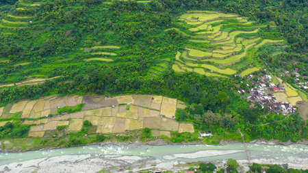 Village and river in a mountain gorge, top view. Rice cultivation in the North of the Philippines, aerial view. Tropical landscape, river and rice fields. Landscape, villages in the highlands.