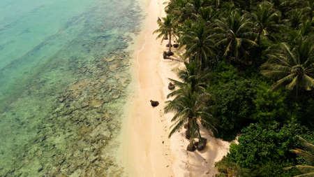 Wild white sand beach with coconut trees. Caramoan Islands, Philippines. Beautiful islands, view from above. Summer and travel vacation concept.