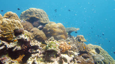 Tropical fishes and coral reef, underwater footage. Seascape under water. Leyte, Philippines. Zdjęcie Seryjne