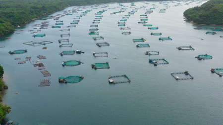 Fisheries on Luzon Island, Philippines. Fish farm, top view. Aerial view of fish ponds for bangus, milkfish.