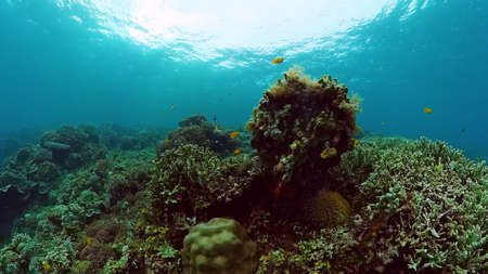 Tropical fishes and coral reef underwater. Hard and soft corals, underwater landscape. Panglao, Bohol, Philippines. Archivio Fotografico
