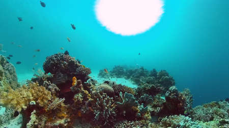 Tropical fishes and coral reef at diving. Beautiful underwater world with corals and fish. Panglao, Bohol, Philippines.
