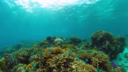 Beautiful underwater landscape with tropical fishes and corals. Life coral reef. Panglao, Bohol, Philippines. Philippines.