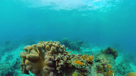 Beautiful underwater landscape with tropical fishes and corals. Life coral reef. Panglao, Bohol, Philippines. 版權商用圖片