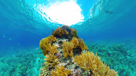Tropical coral reef seascape with fishes, hard and soft corals. Underwater video. Panglao, Bohol, Philippines. Zdjęcie Seryjne