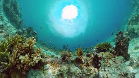Underwater fish garden reef. Reef coral scene. Seascape under water. Panglao, Bohol, Philippines. Zdjęcie Seryjne