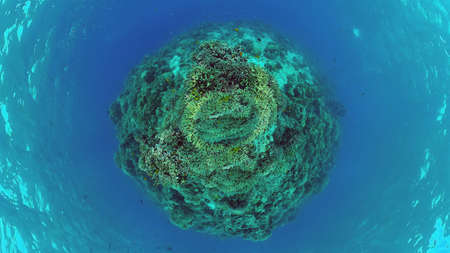 Underwater Scene Coral Reef. Tropical underwater sea fishes. Panglao, Bohol, Philippines. Zdjęcie Seryjne