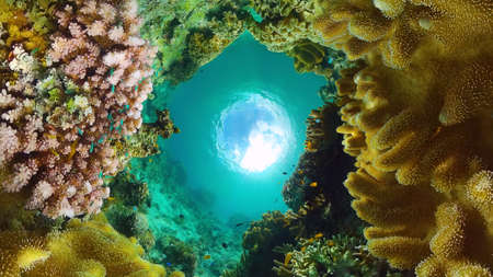 Tropical fishes and coral reef underwater. Hard and soft corals, underwater landscape. Panglao, Bohol, Philippines.