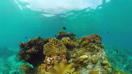 Tropical fishes and coral reef at diving. Underwater world with corals and tropical fishes. Panglao, Bohol, Philippines.