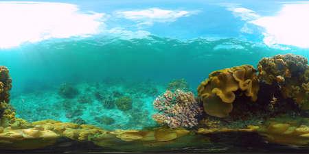 Underwater Scene Coral Reef 360VR. Tropical underwater sea fishes. Virtual tour 360. Panglao, Philippines. Zdjęcie Seryjne