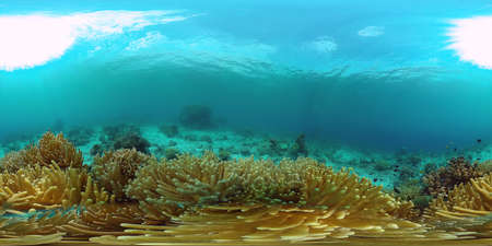 Tropical coral reef 360VR. Underwater fishes and corals. Panglao, Philippines.