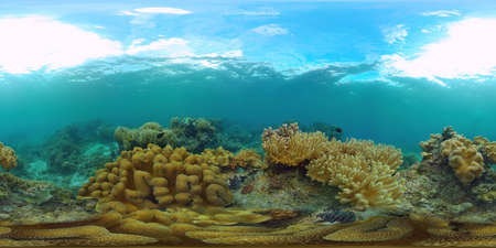 Coral reef underwater with fishes and marine life. Coral reef and tropical fish. Panglao, Philippines. 360VR foto. Zdjęcie Seryjne