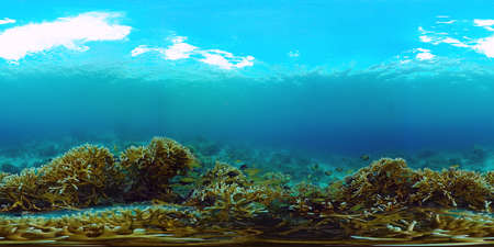 360VR Foto: Beautiful underwater world with coral reef and tropical fishes. Panglao, Philippines. Travel vacation concept