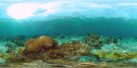 Tropical fishes and coral reef at diving. Beautiful underwater world with corals and fish. Panglao, Philippines. 360 VR foto. Zdjęcie Seryjne