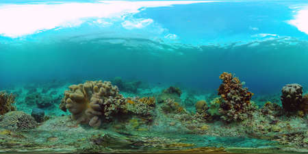 Coral reef and tropical fishes. The underwater world of the Philippines. VR 360 Foto.