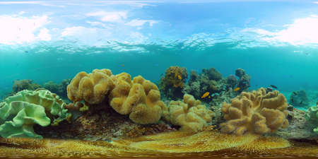 Coral reef and tropical fishes. The underwater world of the Philippines. 360VR foto.