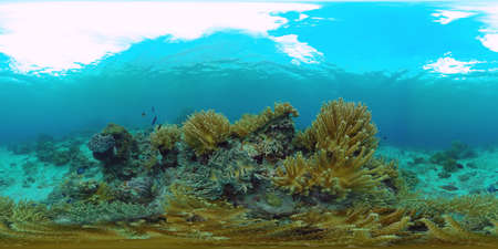 Coral reef underwater with fishes and marine life. Coral reef and tropical fish. Panglao, Philippines. VR 360 Foto.