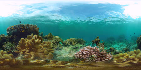Tropical fishes and coral reef at diving. Beautiful underwater world with corals and fish. Panglao, Philippines. 360VR.