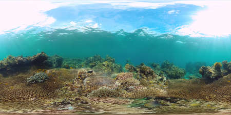Tropical fishes and coral reef underwater. Hard and soft corals, underwater landscape. Travel vacation concept Zdjęcie Seryjne