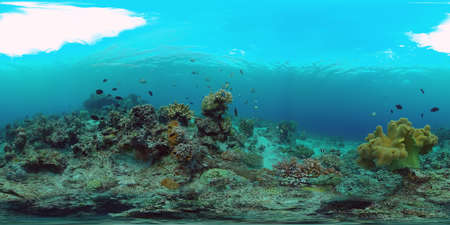 Tropical fishes and coral reef underwater. 360VR foto. Hard and soft corals, underwater landscape. Travel vacation concept Zdjęcie Seryjne