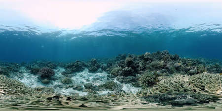 Coral reef and tropical fishes. The underwater world of the Philippines.