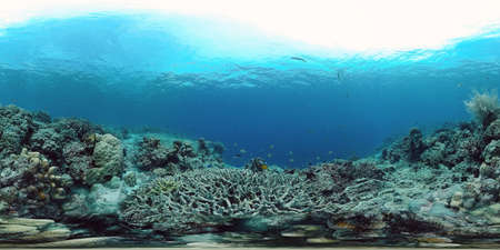 360VR: Beautiful underwater world with coral reef and tropical fishes. Panglao, Philippines. Travel vacation concept