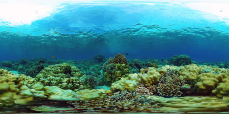 Coral reef underwater with fishes and marine life. Coral reef and tropical fish. Panglao, Philippines. Zdjęcie Seryjne