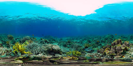 Coral reef underwater with fishes and marine life. Coral reef and tropical fish. Panglao, Philippines. Stock Photo