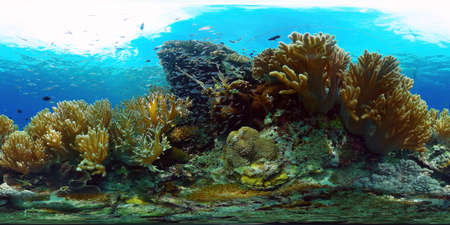 Underwater fish reef marine 360VR. Tropical colorful underwater seascape with coral reef. Panglao, Philippines.