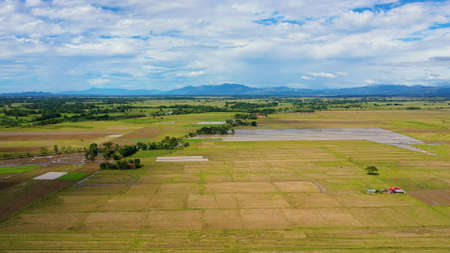 Agricultural land and rice fields in the Philippines. Cultivated farmland and paddy rice fields. Agriculture concept. Banque d'images