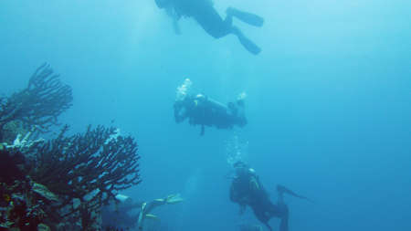Scuba Divers swim over coral reef with fishes in blue sea. Tropical underwater seascape with coral reef. Leyte, Philippines.