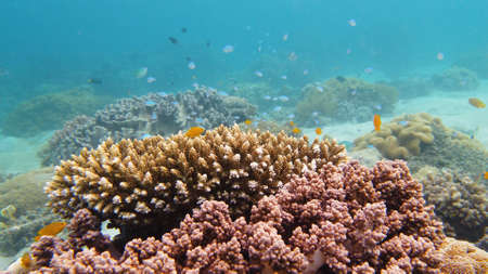 Tropical fishes and coral reef at diving. Beautiful underwater world with corals and fish. Leyte, Philippines.