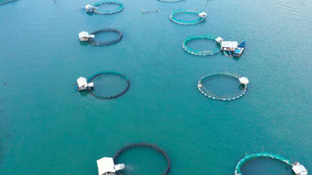 Fish cages and fish breeding nets at a fish farm. Aerial view of fish ponds for bangus, milkfish. Philippines, Luzon.