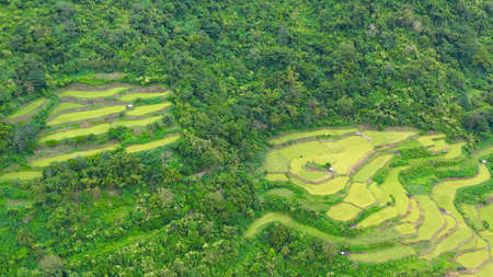 Bright landscape with rice terraces, view from above. Rice terraces in the Philippines. The village is in a valley among the rice terraces. Rice cultivation in the North of the Philippines,