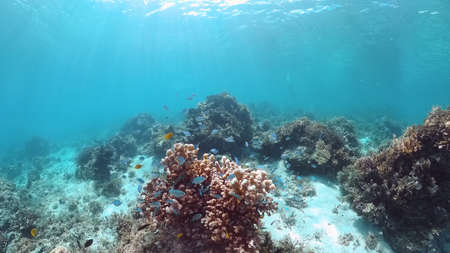 Coral reef underwater with fishes and marine life. Coral reef and tropical fish. Panglao, Bohol, Philippines. Banque d'images
