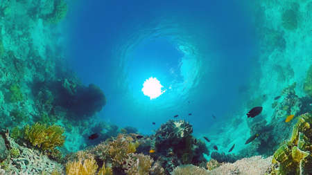 Coral reef underwater with tropical fish. Hard and soft corals, underwater landscape. Travel vacation concept. Panglao, Bohol, Philippines. Banque d'images