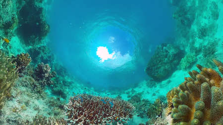 Tropical coral reef and fishes underwater. Hard and soft corals. Underwater video. Panglao, Bohol, Philippines. Banque d'images