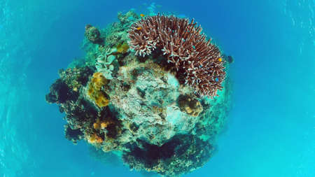 Tropical coral reef. Underwater fishes and corals. Panglao, Philippines. Banque d'images