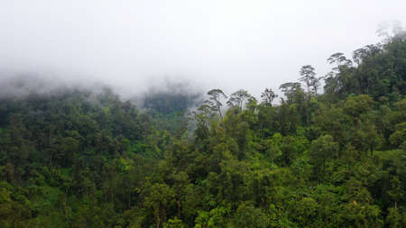 Aerial drone of rainforest on the mountain slopes with clouds. Philippines, Mindanao. Zdjęcie Seryjne