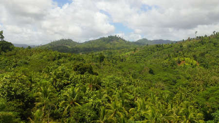 Aerial View of Rainforest in Mindanao island, Philippines. Jungle in Asia. Standard-Bild
