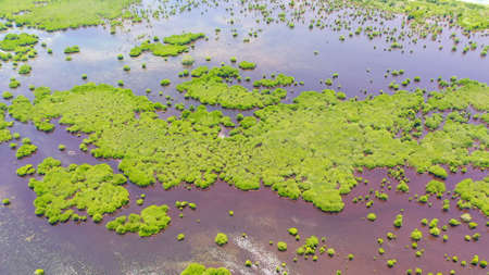 Aerial view of panoramic mangrove forest. Mangrove landscape. Great Santa Cruz island. Zamboanga, Mindanao, Philippines. Standard-Bild - 156871952