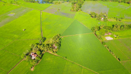 Tropical landscape with farmland and rice fields, aerial drone. Philippines, Mindanao. Rice fields in Asia. Standard-Bild
