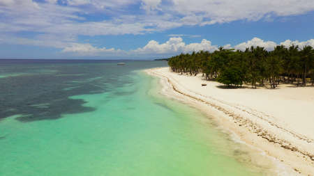 Beautiful tropical island with sand beach. Panglao, Philippines. Seascape with beautiful beach and palm trees.