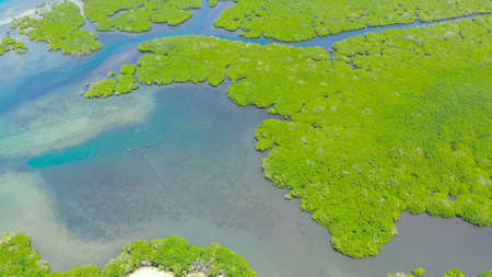 Aerial view of panoramic mangrove forest. Mangrove landscape. Bohol,Philippines. Standard-Bild