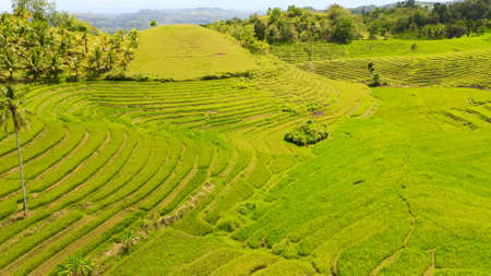 Aerial view of Rice terraces in the Philippines. Rice plantations in Asia. Standard-Bild